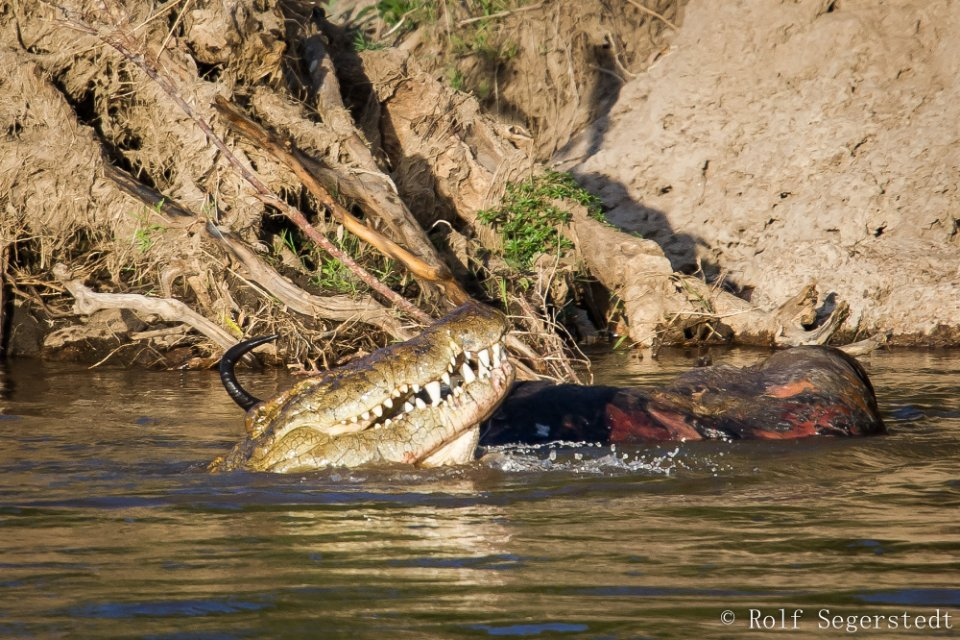 masai mara floden